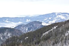 Forest snow mountain panorama royalty free stock photo