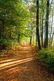 Germany,Autumn forest, path Royalty Free Stock Photography