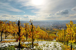 Germany autumn landscape with the view from vineyard hills. Vineyards in autumn with the first snow Stock Image