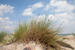 Germany, Baltic Sea, beach dune and marram g Royalty Free Stock Image