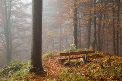 Germany, Berchtesgadener Land, bench in autumn forest, foggy Stock Photos
