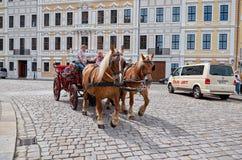 germany Besättningen av hästarna i gatan i Dresden 16 Juni 2016 Arkivfoto