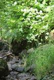 Germany Creek 41. Germany Creek in Washington State Stock Photo