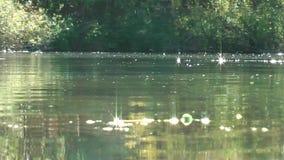 germany Czubik (1846 M) och Konczysty Wierch (2002 M) sikt från Trzydniowianski Wierch (1758 M) Biotope Livstid på vattnet arkivfilmer
