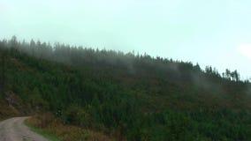 germany ` della foresta nera del ` di regione Forte vento nelle montagne video d archivio
