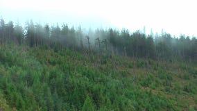germany ` della foresta nera del ` di regione Forte vento nelle montagne archivi video