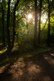 Germany, evening mood in forest Stock Photo