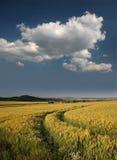 germany för kornbeifält gerstenfeld kassel Arkivbild
