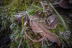 Frost on leaf Winter season macro plants royalty free stock photos