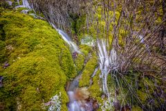 Frost on plants moss forest macro scenery royalty free stock photo