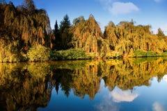 Germany,Hamburg, Trees reflecting in water Stock Photos