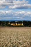 Germany,Hesse,Rhine Hesse,View of wheat field Stock Photo
