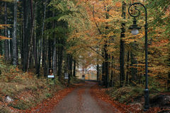 GERMANY, Hohenschwangau. The road for a walk to the Alpsee lake is surrounded by an autumn forest Stock Photography