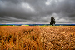 Germany landscape, field and single tree. Germany landscape, field. The single tree, black clouds, sky royalty free stock photo