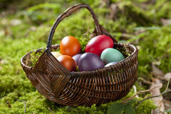 Germany, Lower Bavaria, Variety of Easter eggs in basket on moss Royalty Free Stock Images