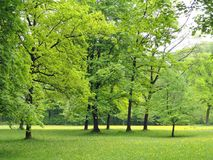 Germany, Nature, Trees, Foliage Royalty Free Stock Images