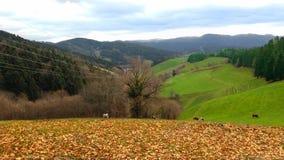germany Região da floresta preta Paisagem no outono imagem de stock royalty free