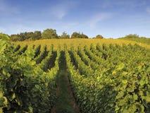 germany rhein vingårdweil Arkivfoton