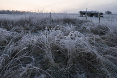 Germany, Rhineland-Palatinate, grasses in winter, frost-covered Royalty Free Stock Photos