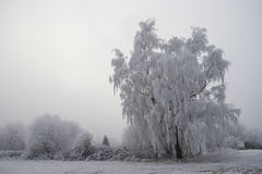 Germany, Rhineland-Palatinate, Trees in winter Stock Photography