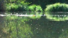 germany Riserva naturale Biotopo Vita sull'acqua video d archivio