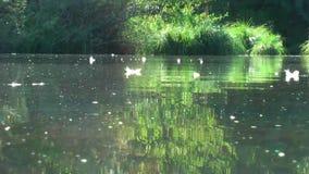 germany Riserva naturale Biotopo Vita sull'acqua archivi video