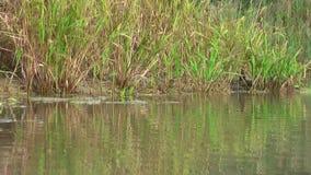 germany Riserva naturale Biotopo Vita sull'acqua stock footage