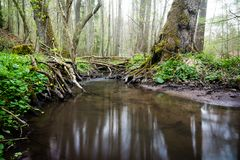 Water stream on meadow woods forest tree stock images