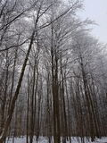 Germany Winter Forest royalty free stock photos