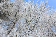 Germany / Winter scene. Winter scene in a cold day in Germany Stock Photo