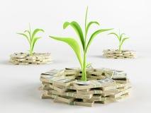 Germe d'argent Photographie stock libre de droits