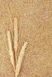 Germe de blé Photos libres de droits