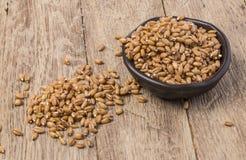 Germe di grano germogliato Immagini Stock Libere da Diritti