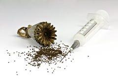 Germen de amapola de opio Imágenes de archivo libres de regalías