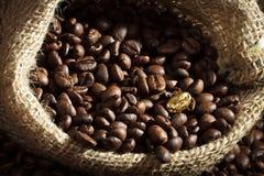 Germen de oro del café en el saco del café de la arpillera Fotografía de archivo libre de regalías