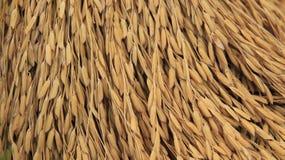 Germen del arroz garner imágenes de archivo libres de regalías