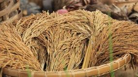 Germen del arroz granero imagen de archivo