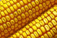 Germen del maíz Fotos de archivo