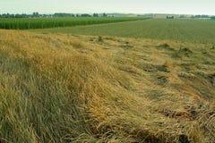Germen y saltos de la hierba Fotografía de archivo libre de regalías