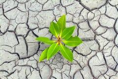 Germen y suelo seco Foto de archivo libre de regalías