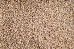 Germes do arroz fotografia de stock