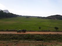 Germinação do arroz imagens de stock