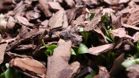 Germinación vegetal cada vez mayor de los brotes del timelapse de las plantas almacen de metraje de vídeo