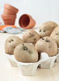 Germinate potatoes in the egg carton to plant. Germinate potatoes in the carton to plant Stock Photography