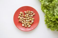 Germinated beans and lettuce Stock Image