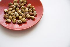 Germinated beans. On red plate with copy space in right corner Royalty Free Stock Images