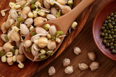 Germinated beans Royalty Free Stock Photos