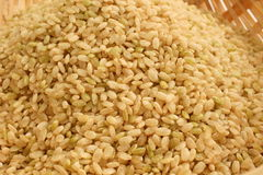 Germinated brown rice. It is germinated brown rice. It is considered good for health Stock Photos
