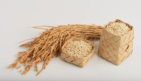 Germinated brown rice or GABA-rice. Germinated brown rice or GABA-rice, medicinal properties royalty free stock images