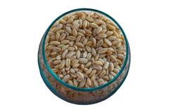 Germinated brown rice or GABA-rice, medicinal properties. Royalty Free Stock Photos